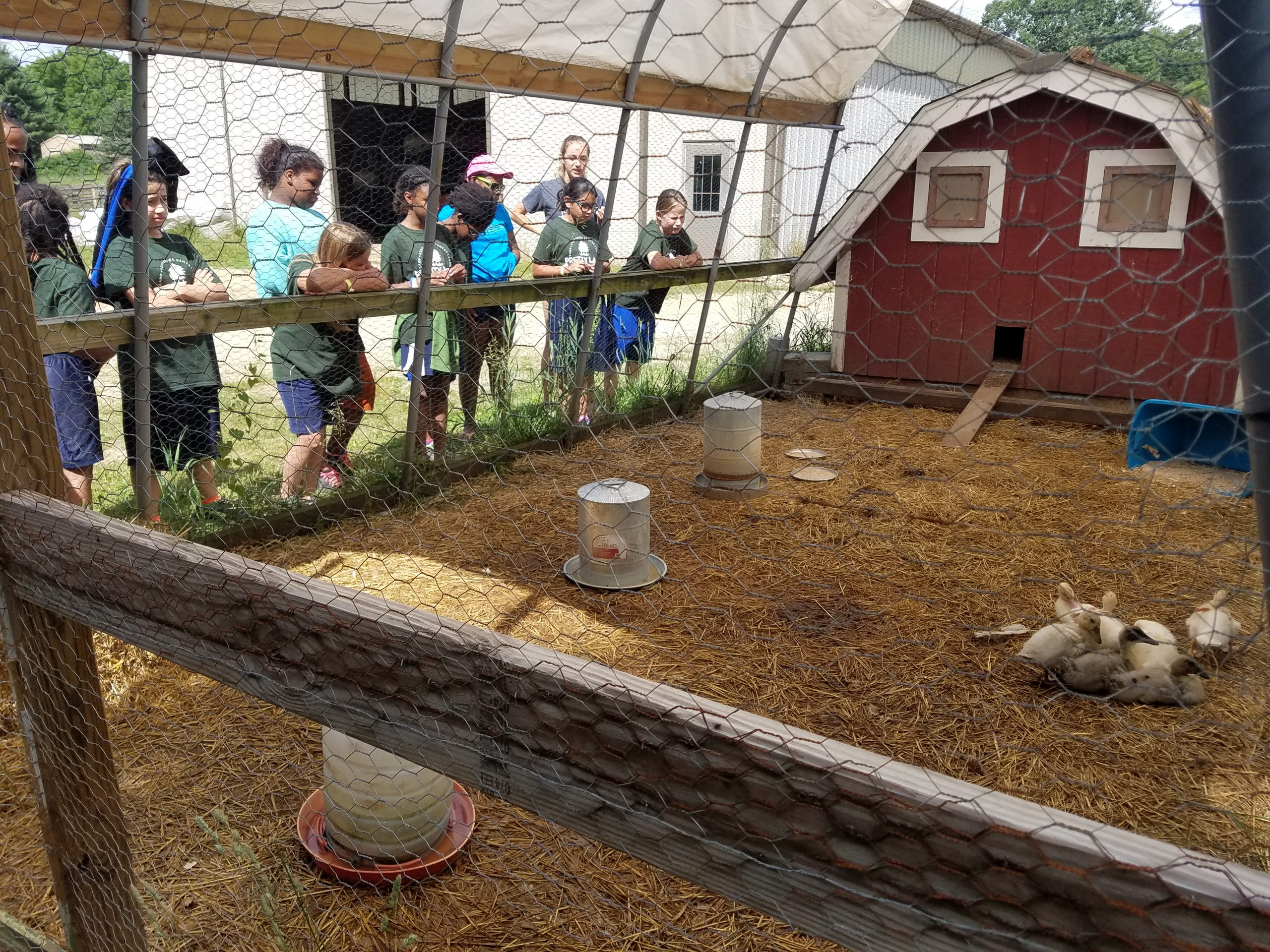 Pretty Lake Campers learn about ducks at the farm