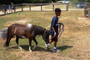Pretty Lake Farm has animals that campers love